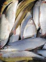 Ирина рыбное хозяйство