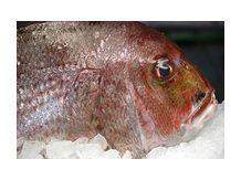 дикое  Дорадо----Рыба  из  аргентины