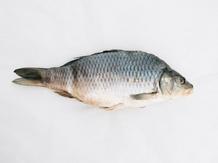 карельская рыбка